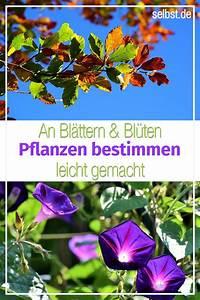 Blumen Erkennen App : pflanzen bestimmen pflanzen blumen pflanzen und ~ A.2002-acura-tl-radio.info Haus und Dekorationen