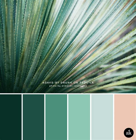 an agave inspired color palette akula kreative