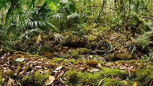 Forest Floor Decay Of Undergrowth Rain Forest Ecosystem