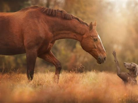 horse wallpapers hd pictures  hd wallpaper pictures
