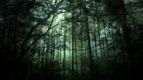 dark fantasy forest background stock motion graphics