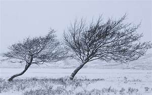 Windy Winter wallpapers | Windy Winter stock photos