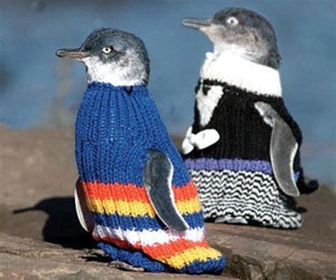 penguin sweater penguins in sweaters zealand