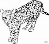 Leopard Coloring Pages Print Animal sketch template
