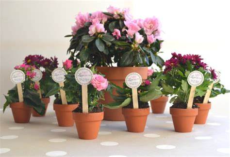 mini flower pot diy favors baby shower pinterest
