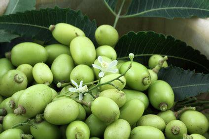 pure neem oil  plants  healthy pesticide