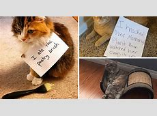 The best of catshaming on Instagram 19 cats who were
