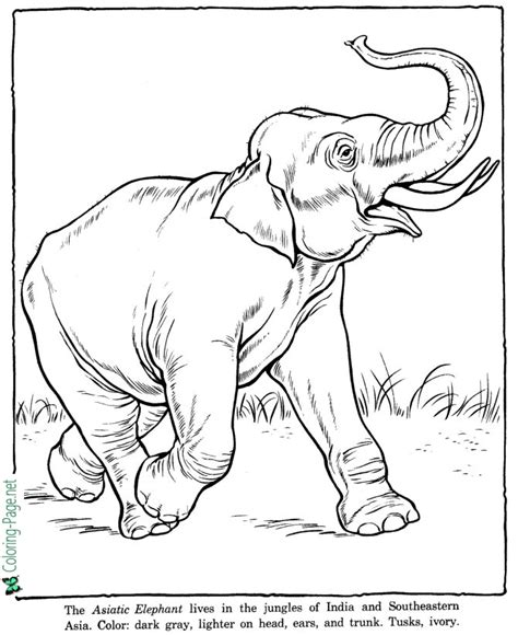 zoo coloring pages