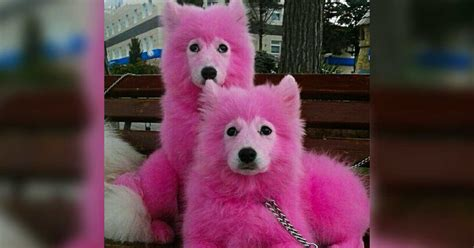 dogs dyed pink rescued  forest