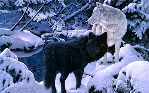 Black Wolf Wallpaper Laptop by Free Hd Wolf Wallpapers Wallpaper Cave