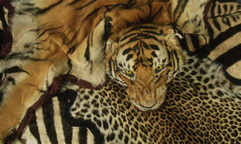 Causes and Impacts Illegal Wildlife Trading? NO Way