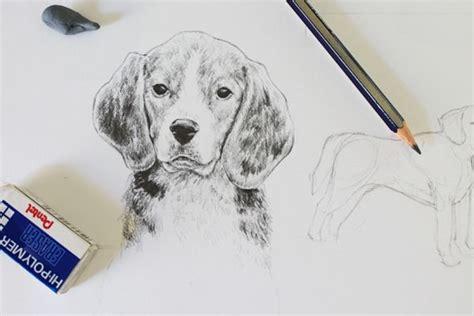 drawing realistic animals   draw  dog