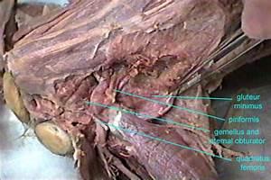 Diagram Of Hip Anatomy