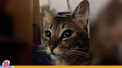 Dia Internacional del Gato, descubre por qué se celebra