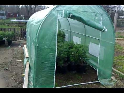 cannabis dans une serre graines de