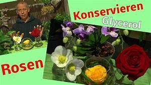 Blumen Trocknen Ohne Farbverlust : rosen konservieren mit glycerin glycerol testanfang 1 zu ~ A.2002-acura-tl-radio.info Haus und Dekorationen