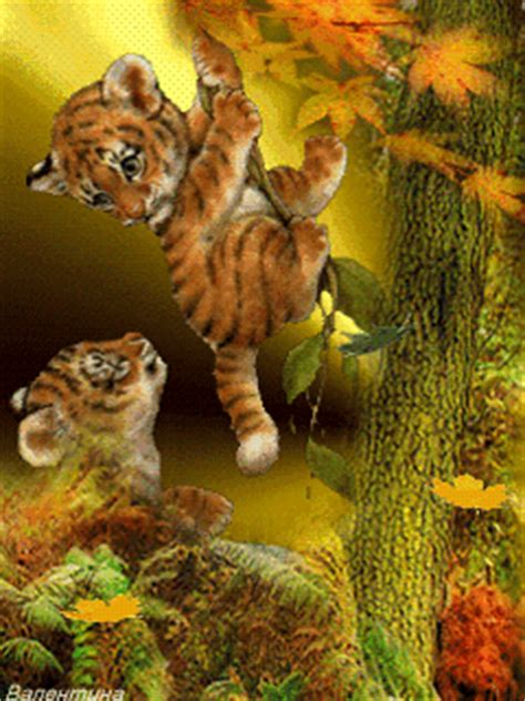 animated tiger cubs wallpaper