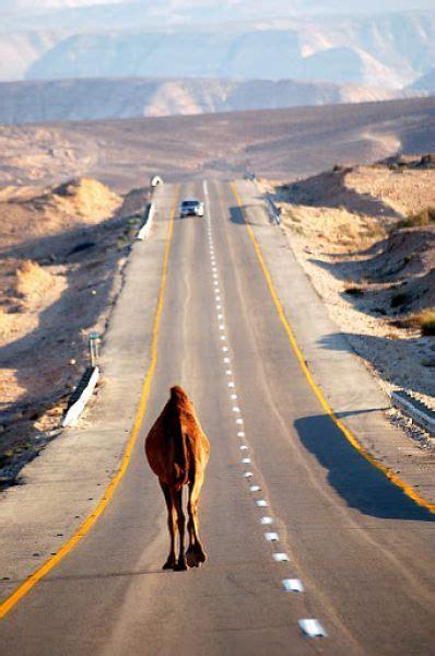 Brilliant Pictures (90 pics) - Izismile.com