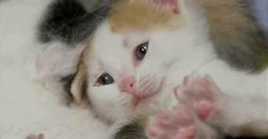 Sleepy Kitten GIF - Find & Share on GIPHY