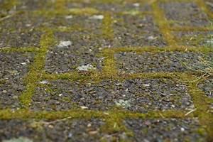 Mittel Gegen Gras Zwischen Steinen : moos im rasen entfernen so werden sie das moos los ~ Michelbontemps.com Haus und Dekorationen