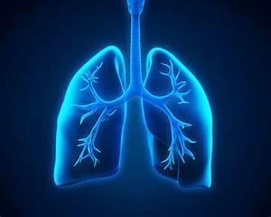 Pulmonary Allergy Critical Care Medicine Home