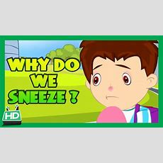 Why Do We Sneeze ? Youtube