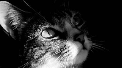 Cat Wallpapers Cats Bing Background Gatos Katze