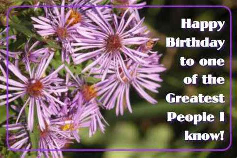 happy birthday purple flowers  happy birthday ecards