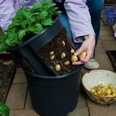 Landhaus Garten Blog : landhaus blog kartoffeln im eimer pflanzen eine idee f r balkon oder garten garten ~ One.caynefoto.club Haus und Dekorationen