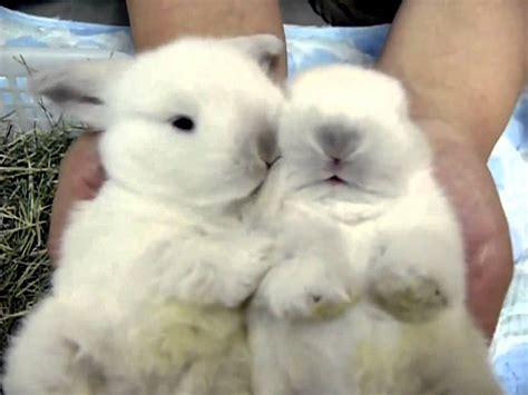 Cute White Baby Bunnies