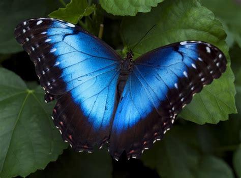 breathtaking colors    beautiful butterflies
