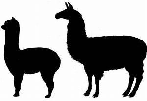 Serendipity Farm Alpacas & Llamas: Differences Between ...
