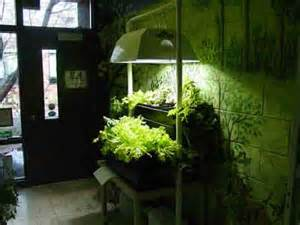 indoor plants with led grow lights led grow light