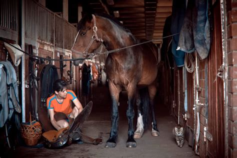 horse woman vacuum saddle young prepares brushing market which grooming stable horses