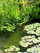 Water Garden Water Garden Boat Jetty