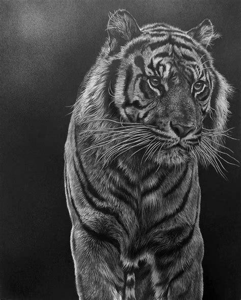 trending wildlife art ideas  pinterest waterpaint