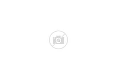 Bear Alaska Clipart Silhouette Animal Clipground Wild