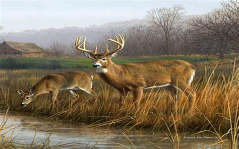 Deer Hunting Iphone Wallpaper Cool Deer Wallpapers Wallpapersafari
