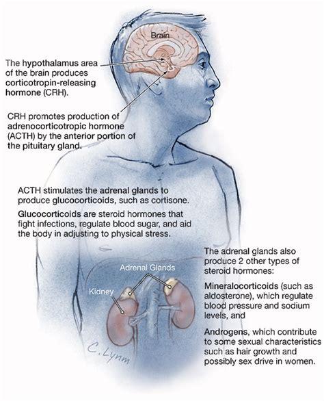 adrenal insufficiency endocrinology jama jama network