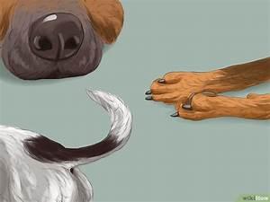 Brust Gewicht Berechnen : die rasse deines hundes bestimmen wikihow ~ Themetempest.com Abrechnung