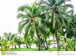 Coconut Garden Stock Photo - Image: 44863011