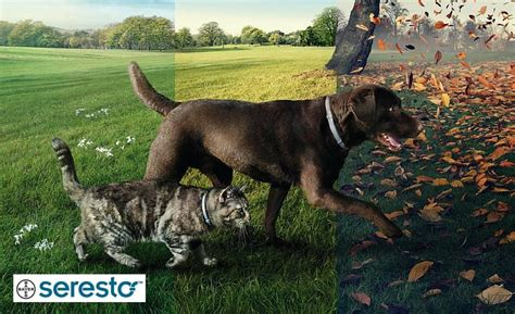 hund katze gegen zecken floehe wuermer wadukucom
