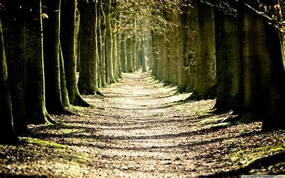 Path Lined Tree Background Nature Wallpapers Amazing
