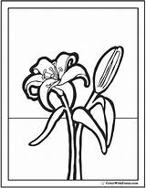 Coloring Lily Printables Pdf sketch template