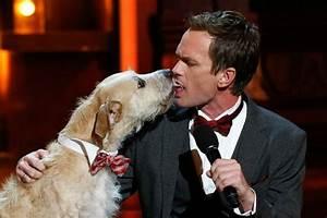 Laisser Un Chien Seul Quand On Travaille : voil pourquoi vous ne devriez jamais laisser votre chien vous l cher le visage ~ Medecine-chirurgie-esthetiques.com Avis de Voitures