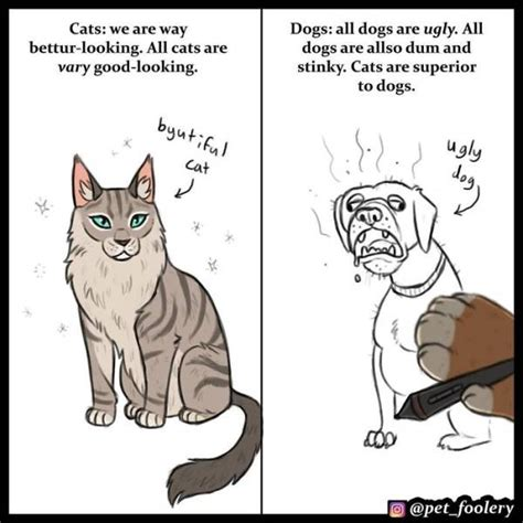 cats dogs better than why cat then dog superior vs comics hilarious debate kittens explaining decided pet welovecatsandkittens lot these