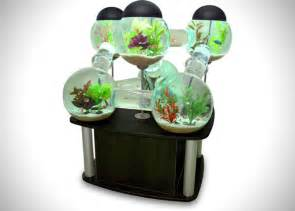 cool things for a room labyrinth fish tank aquarium hiconsumption