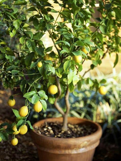 quelle plante pour une chambre savourez la beauté de la plante d intérieur dans notre