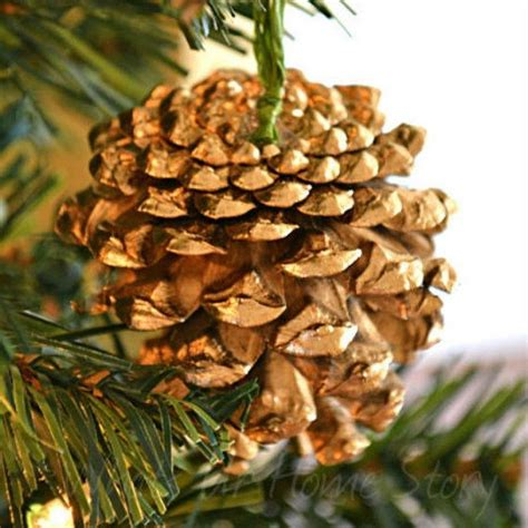 reasons  rush   collect  armful  pine