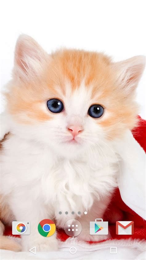 apps for cats cats android apps on play